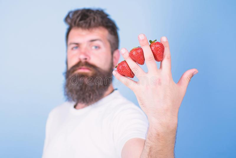 Despite sweet taste berries contain zero sugar. Man beard hipster strawberries between fingers blue background. Nutritional benefits of strawberry. Strawberry royalty free stock photography
