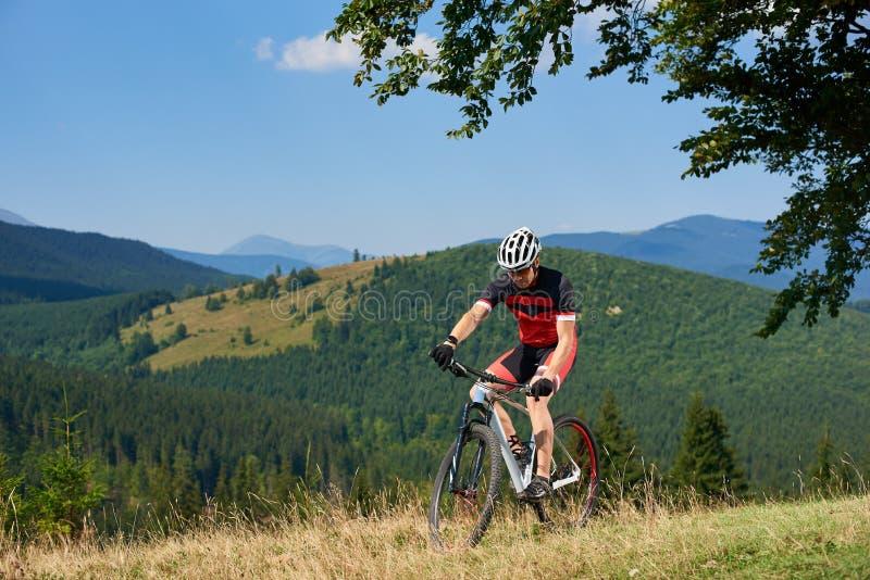 Desportista atlético no sportswear que dá um ciclo uma bicicleta na grama alta sob o ramo de árvore verde grande imagem de stock