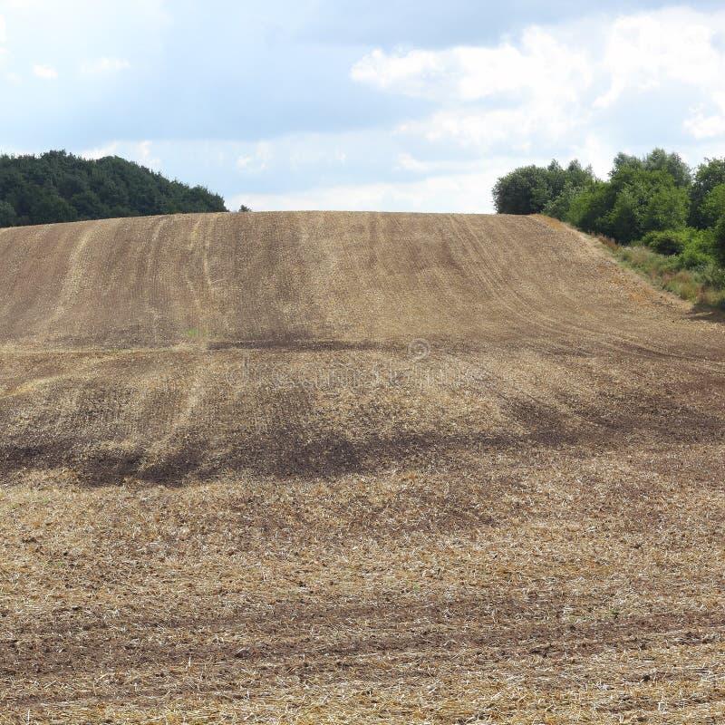 Después de la cosecha de maíz foto de archivo