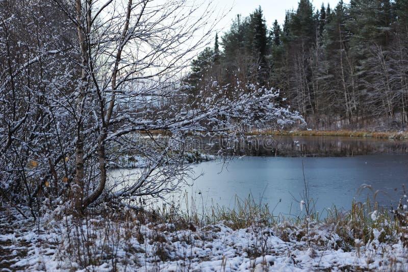 Después de las primeras nevadas fotografía de archivo libre de regalías