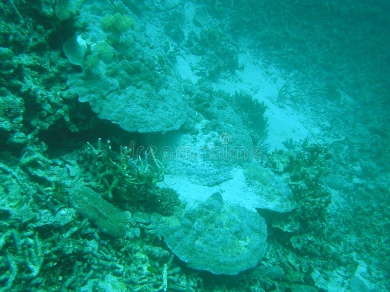Después del tsunami de Coral Reefs fotos de archivo