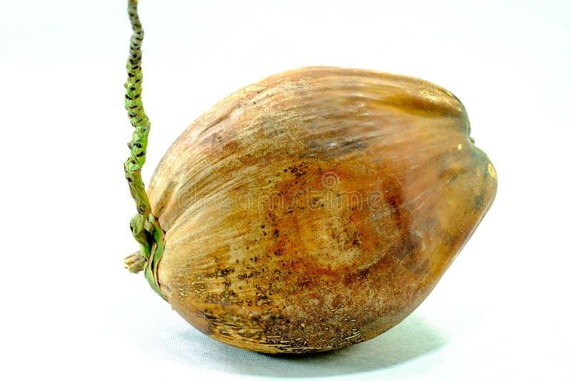 Desséchez la noix de coco photos libres de droits