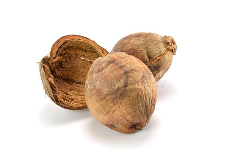 Desséchez la noix de coco sur le fond blanc photographie stock libre de droits