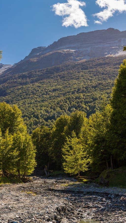 Desséchez la rivière et la forêt de hêtre image stock