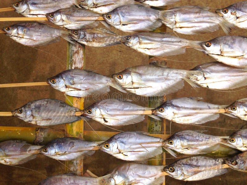 Desséchez le coup de poissons dans le bâton en bambou images libres de droits