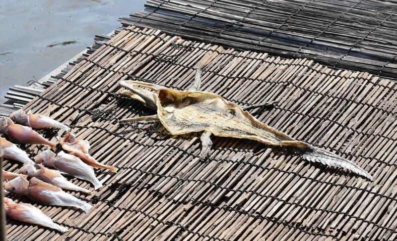 Desséchez le cuir de crocodile photographie stock