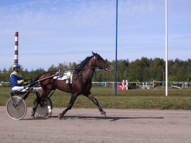 Dessiné par un cheval d'emballage avec le cheval et le cavalier de champ de courses de Novosibirsk de races de trot de chevaux de images stock