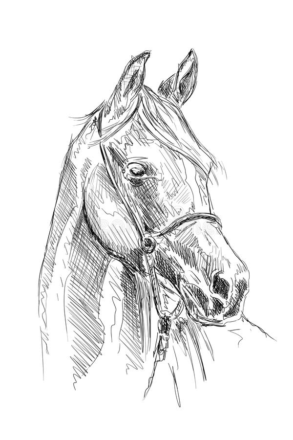 Dessin au crayon main lev e de t te de cheval illustration stock illustration du jument - Dessin de tete de cheval ...