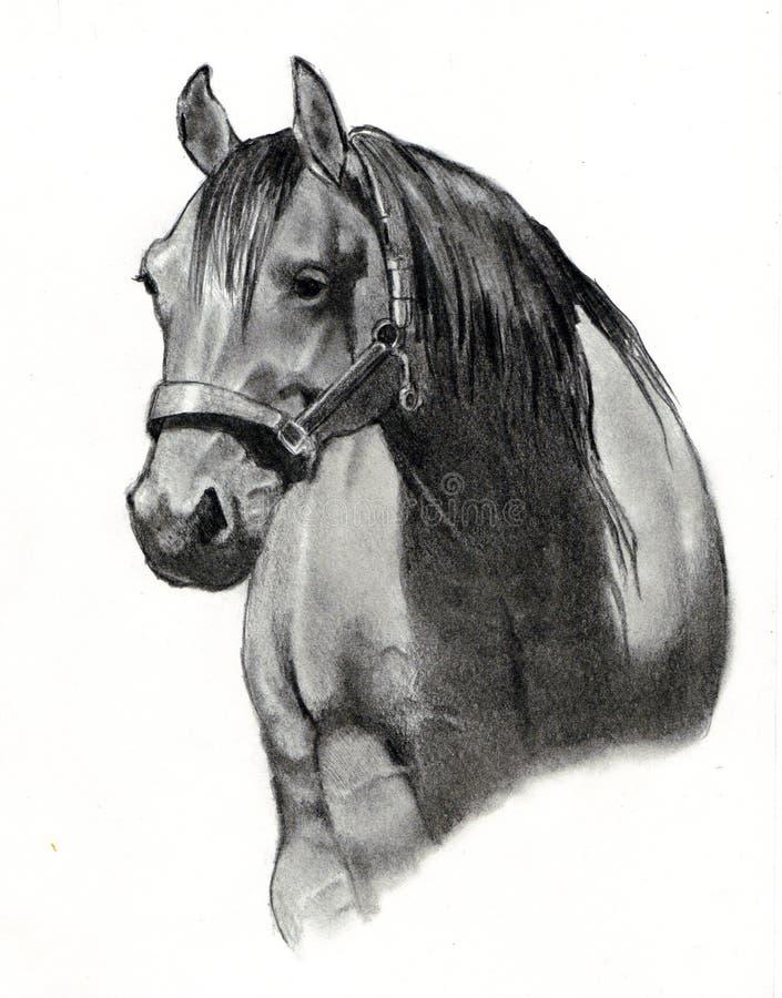 Dessin au crayon de tête de cheval illustration de vecteur