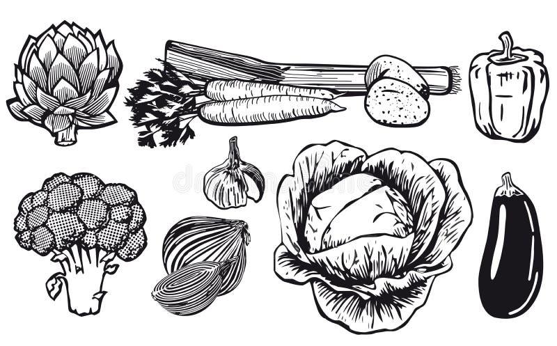 Dessin au trait des légumes assortis illustration libre de droits