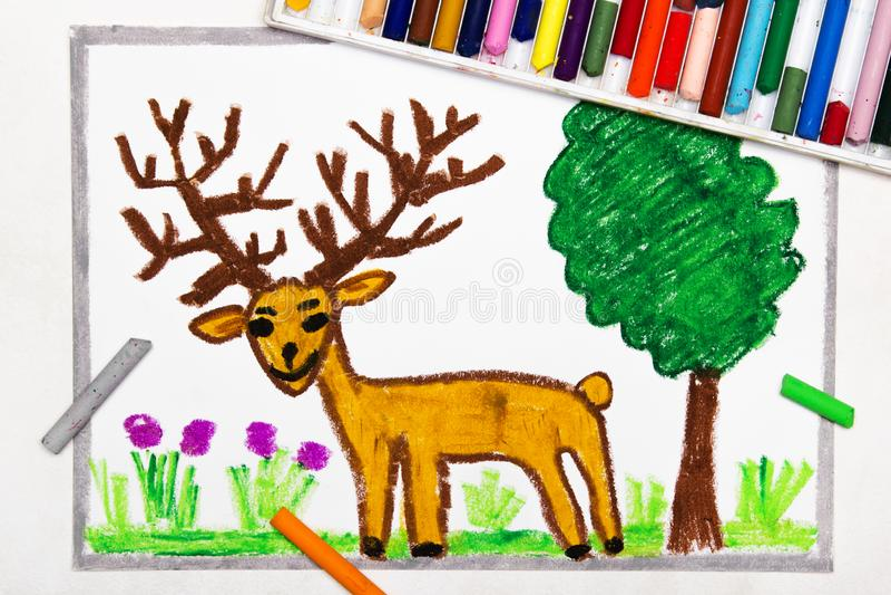 Dessin : cerfs communs bruns mignons avec de grands klaxons de cerfs communs illustration de vecteur