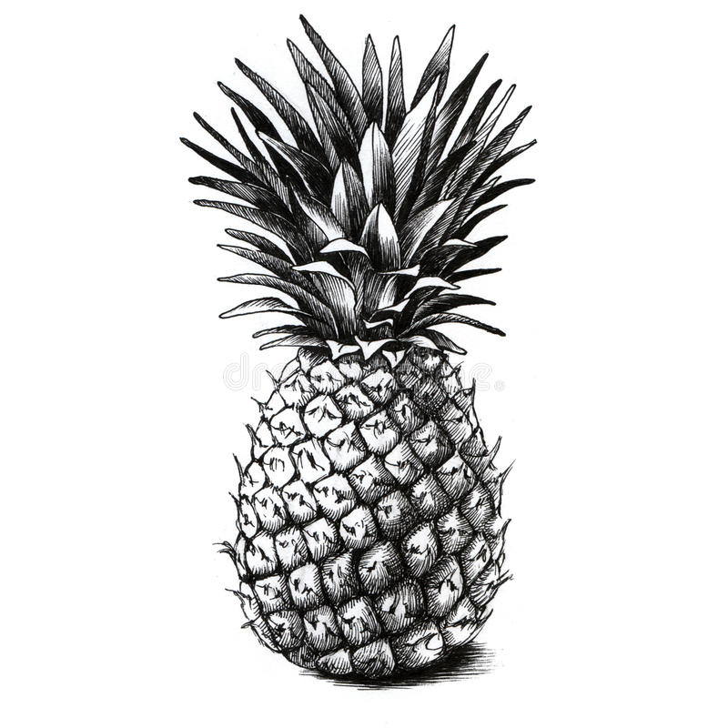 Dessin d 39 ananas illustration stock illustration du juteux - Ananas dessin ...
