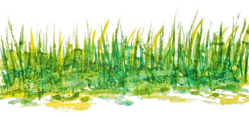 Dessin d'aquarelle de gouache de main d'herbe verte illustration stock