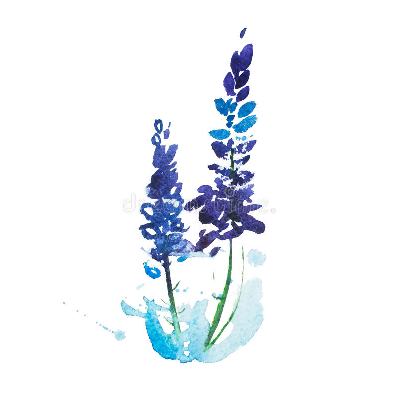 Dessin d'aquarelle des fleurs, peinture d'aquarelle de bouquet de pré d'été illustration libre de droits