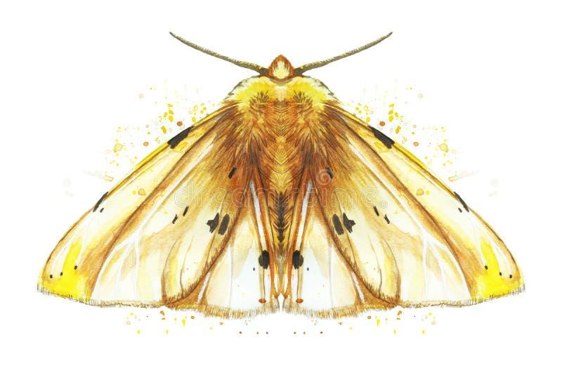 Dessin d'aquarelle d'un papillon de nuit d'insecte, mite, ours jaune, belles ailes, hirsute, animales, copie, décor, conception illustration libre de droits
