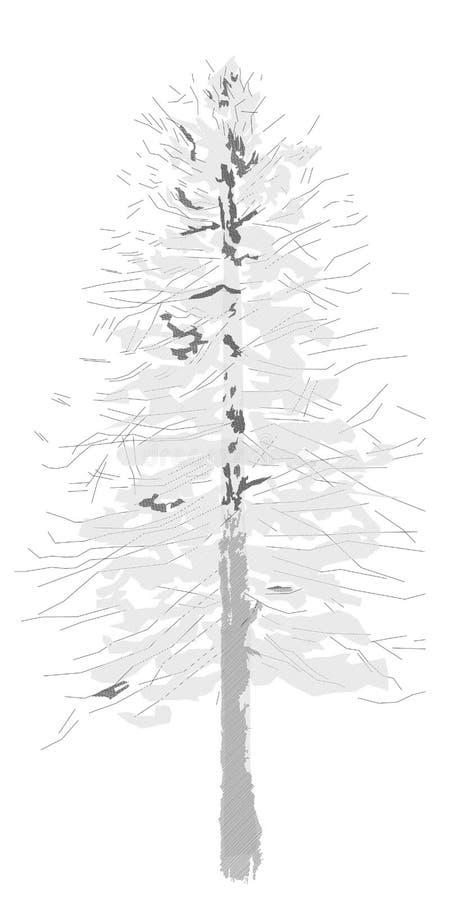 Dessin d'arbre de mélèze, Larix decidua illustration de vecteur