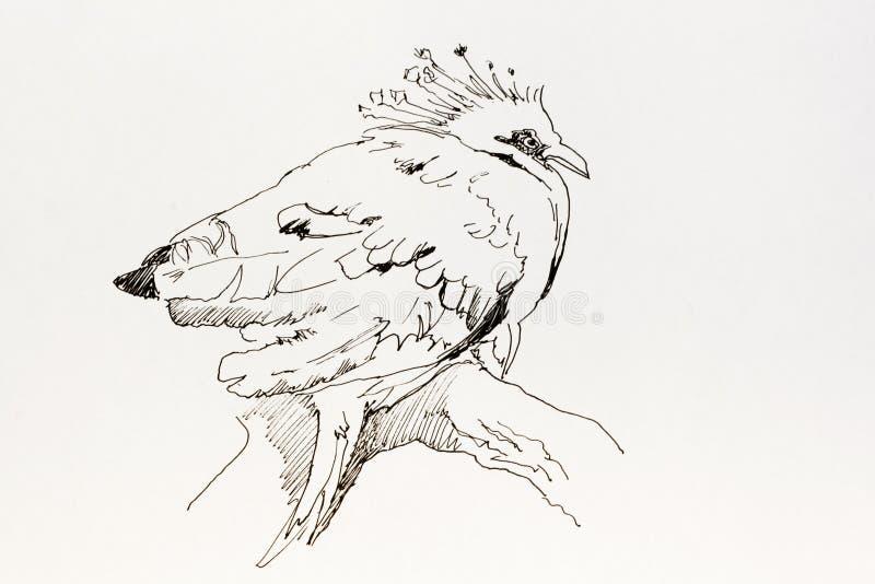 Dessin d'encre de schéma d'oiseau tropical Goura Victoria se reposant dessus illustration stock