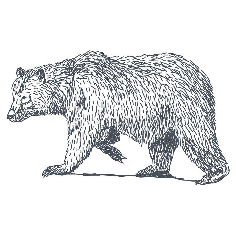 Dessin d 39 ours illustration de vecteur illustration du - Dessin de grizzly ...