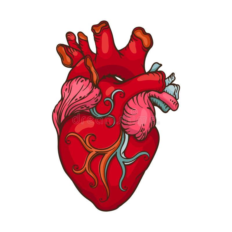 Dessin de coeur humain stylis illustration de vecteur - Dessin du coeur humain ...