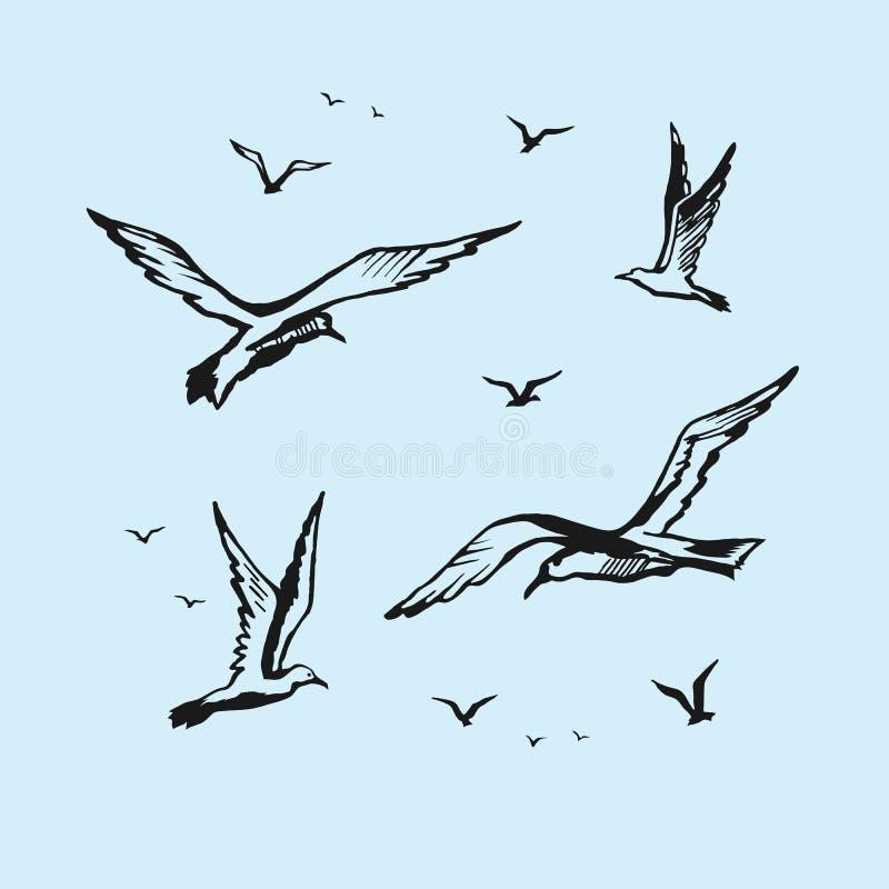 Dessin de croquis de vecteur de mouettes la main illustration de vecteur illustration du - Dessins de mouettes ...