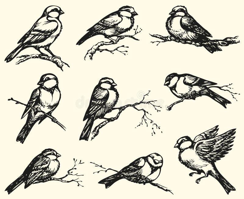 Dessin de dessin à main levée de vecteur Mésanges, moineaux et bouvreuils sur le branc illustration libre de droits