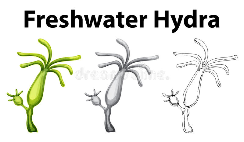 Dessin de griffonnage pour l'hydre d'eau douce illustration libre de droits