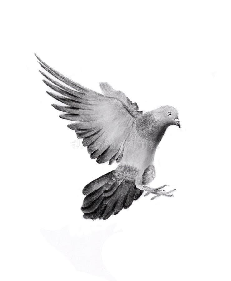 Dessin de main de colombe illustration libre de droits