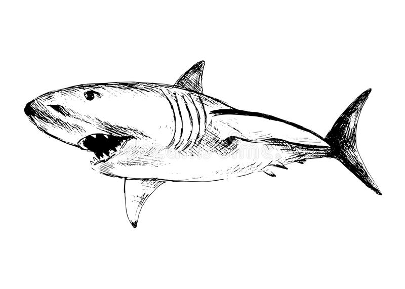 Dessin de main d 39 un requin illustration de vecteur image - Dessin de requin blanc ...