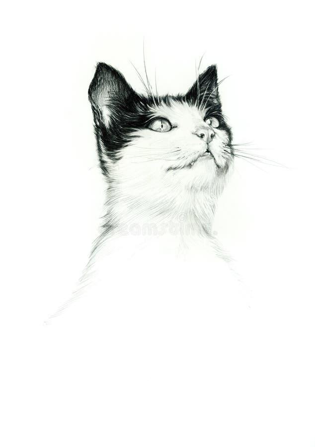 Dessin de portrait de chat image stock