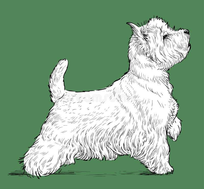Dessin de vecteur d'un terrier écossais debout illustration stock