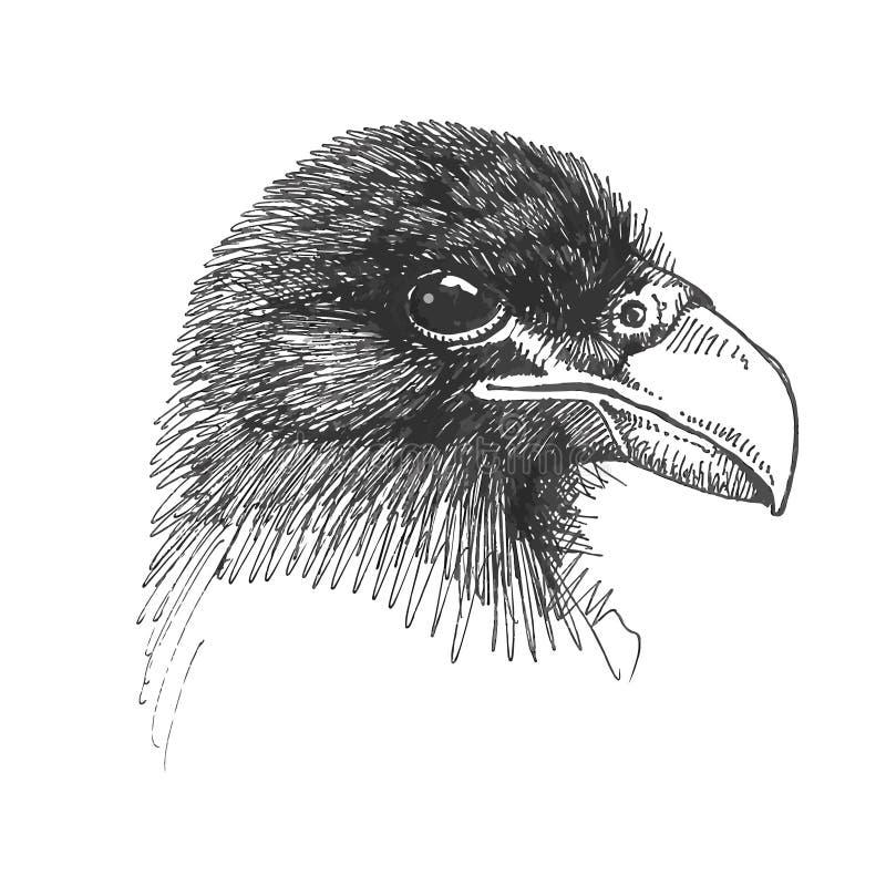 Dessin de vecteur de la tête d'Eagle images stock