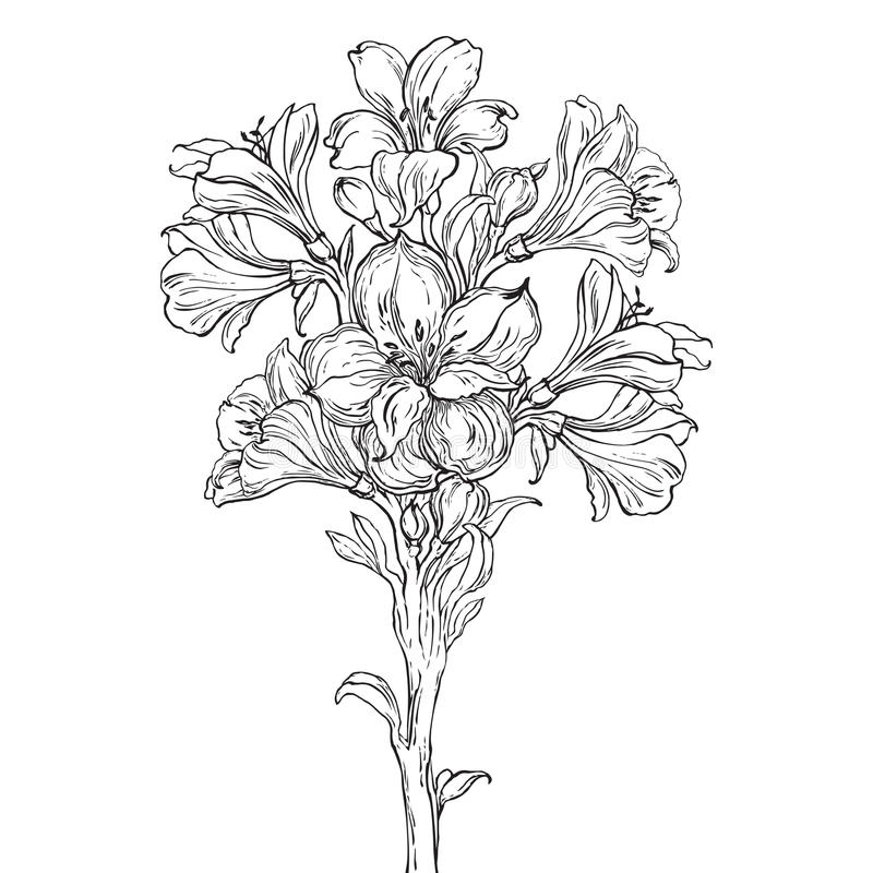 Dessin graphique de fleur d 39 orchid e illustration de vecteur illustration du concept orchid e - Dessin d orchidee ...
