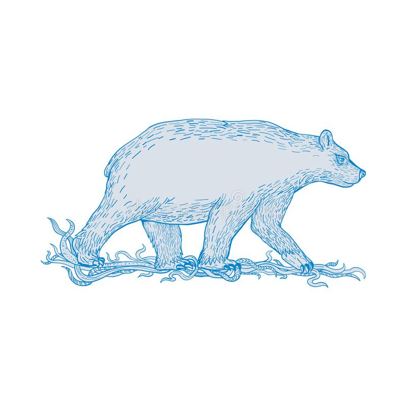 Dessin latéral de marche d'ours blanc illustration libre de droits