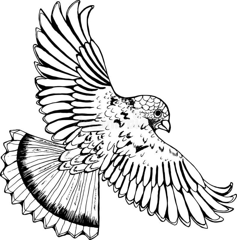 Dessin Noir Et Blanc Dun Aigle Oiseau En Vol Illustration