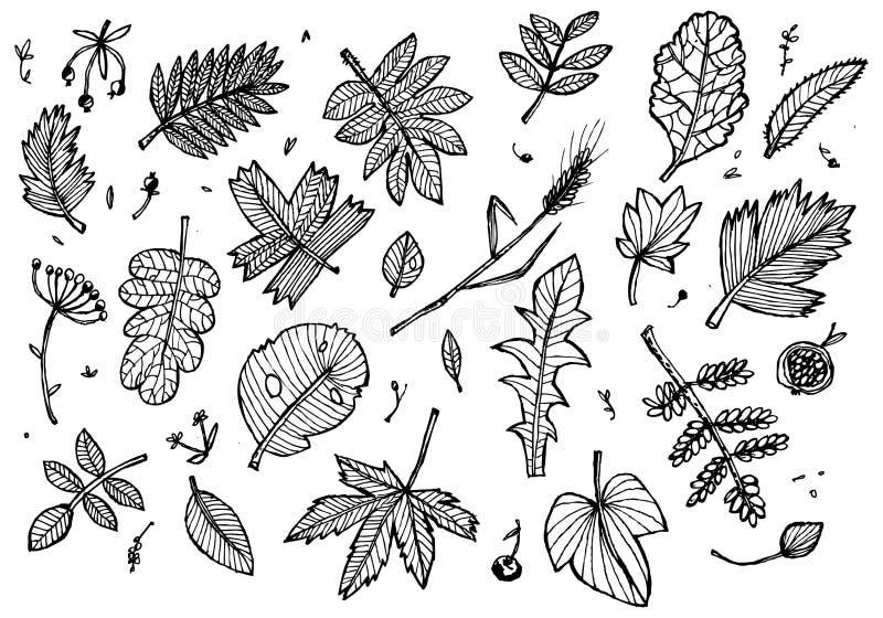 Dessin noir et blanc des feuilles, de l'herbe et des baies d'automne Approprié aux milieux, conception d'emballage, tissus, graph illustration de vecteur