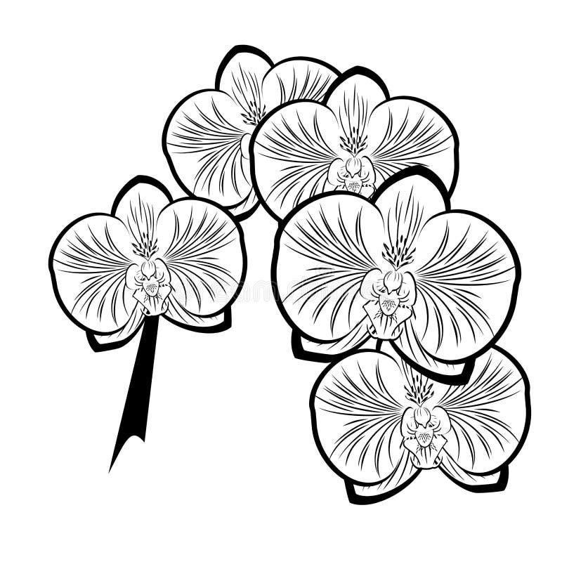Dessin noir et blanc des fleurs d 39 orchid e illustration de vecteur illustration du d coratif - Dessin de fleur en noir et blanc ...