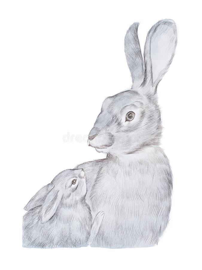 Dessin réaliste de lapin gris de mère et son de bébé tirés par la main illustration de vecteur