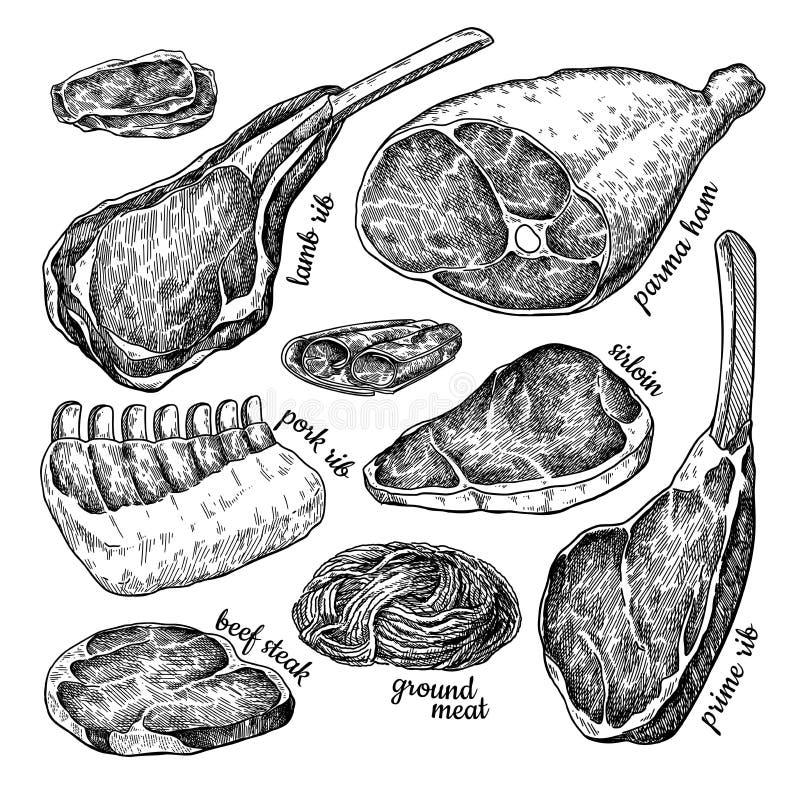 Dessin réglé de vecteur de viande crue Bifteck de boeuf tiré par la main, jambon de porc, nervure d'agneau, farce hachée de poule illustration libre de droits