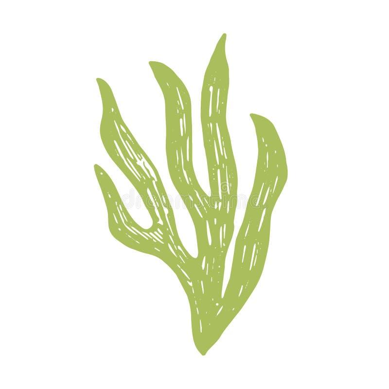 Dessin vert d'algue objet d'isolement par usine marine illustration libre de droits