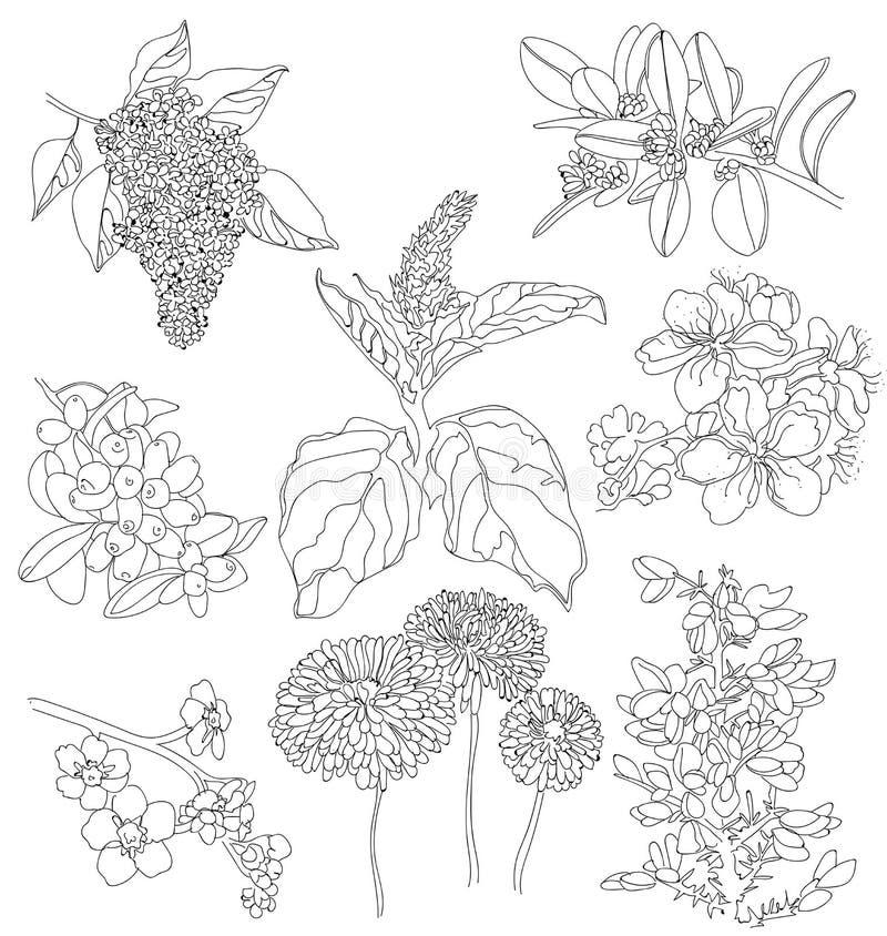 Dessins des fleurs illustration de vecteur