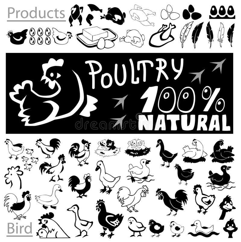 Dessins et icônes de volaille illustration stock