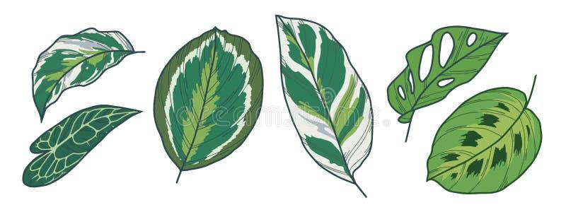 Dessins exotiques de vecteur de feuille de Monstera Adansonii, de médaillon de Calathea, de Medaillon, de fusion blanche, de Poth illustration libre de droits