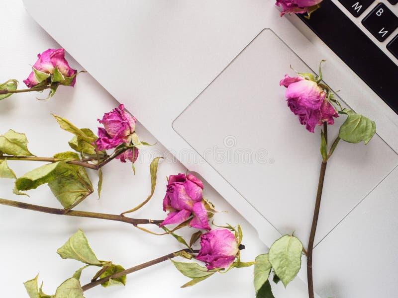 Dessus blanc, ordinateur portable, roses images stock