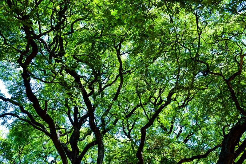 Dessus d'arbre à Buenos Aires images libres de droits