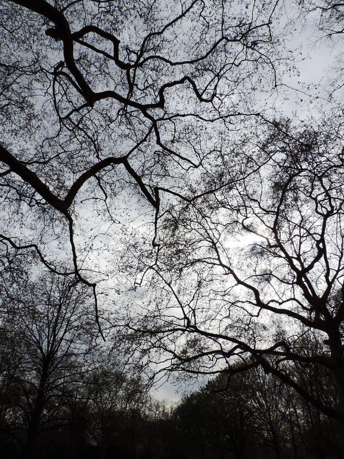 Dessus d'arbre photo stock