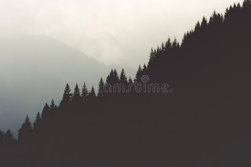 Dessus d'arbre photographie stock libre de droits