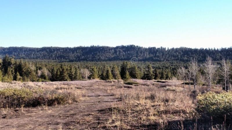 Dessus d'arbre image libre de droits