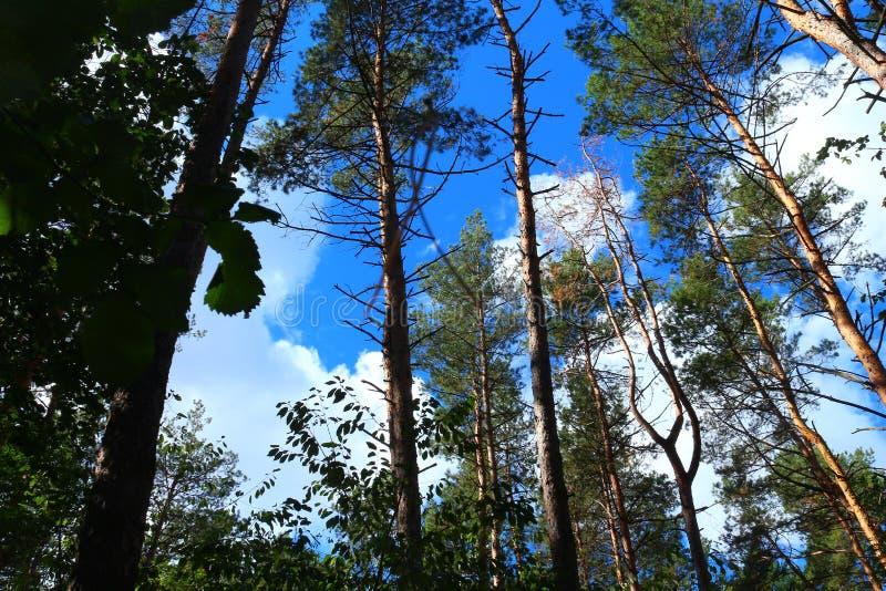Dessus d'arbre - contact des nuages photo stock