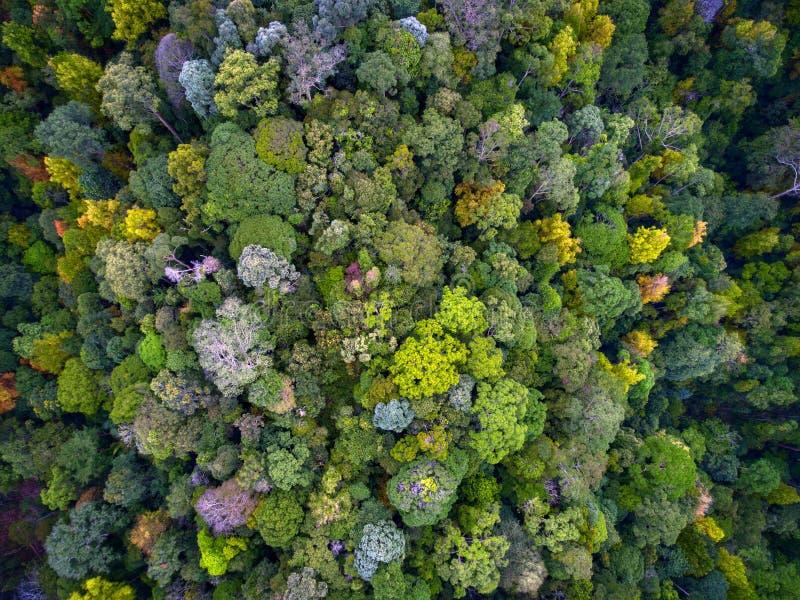 Dessus de forêt humide vers le bas images stock