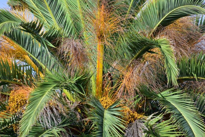 Dessus de palmier image libre de droits